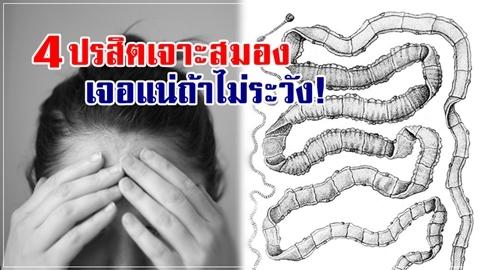 อันตรายถึงชีวิต!! 4 ปรสิตร้าย เจาะสมอง เจอแน่ถ้าใช้ชีวิตไม่ระวัง!!