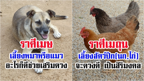 เลี้ยงสัตว์ถูกโฉลก เสริมดวงดี ช่วยเรียกทรัพย์เข้ากระเป๋า!! สัตว์เลี้ยงเสริมดวง ตามราศีเกิด!!