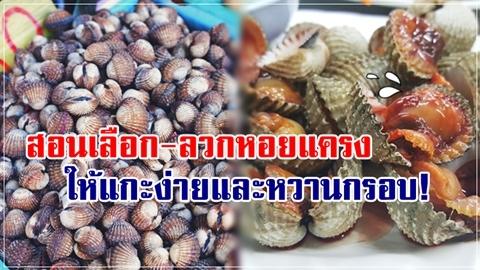 ทำเองง่ายมาก!! สอนวิธีเลือก-ลวกหอยแครง ให้แกะง่ายและเนื้อหวานกรอบ!!