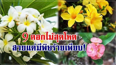 ระวังให้ดี!! 9 ดอกไม้สายโหด สวยมาก แต่มีพิษร้ายแฝงอยู่เพียบ!!