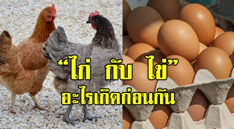 ยังเถียงกันอยู่หรือเปล่า !!! สรุป ไก่ กับ ไข่ อะไรเกิดก่อนกัน วิทยาศาสตร์มีคำตอบ !!!