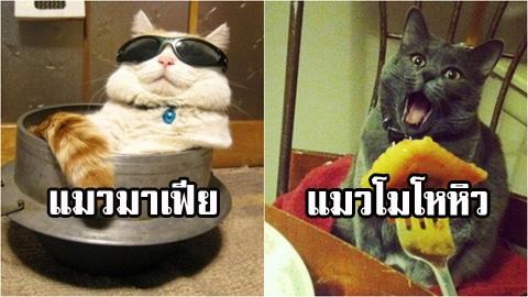 รวมภาพฮาๆ ปนความน่ารัก ของน้องแมว ที่ใครเห็นก็ต้องอมยิ้ม!!