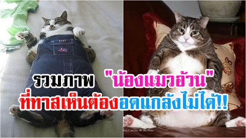 รวมภาพ ''น้องแมวอ้วน'' ที่ทาสเห็นต้องอดแกล้งไม่ได้!!