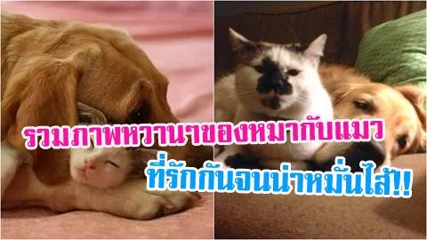 พาไปส่องภาพหวานๆ ของหมากับแมว ที่รักกันจนน่าหมั่นไส้!!
