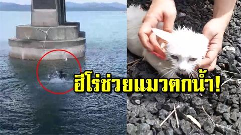 นับถือเลย ใจพี่หล่อมาก!! เปิดภาพประทับใจ ฮีโร่หนุ่มกระโดดช่วยแมวน้อยตกน้ำ (คลิป)