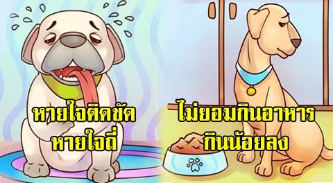 25 พฤติกรรมผิดสังเกตของน้องหมา-น้องแมว ที่บ่งบอกสัญญาณว่าน้องกำลังป่วย !!!