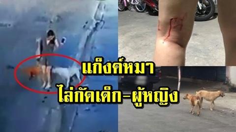 เตือนภัย! ''ฝูงหมาไล่กัด'' เลือดอาบ เน้นกัดเฉพาะเด็กและผู้หญิง!! (คลิป)