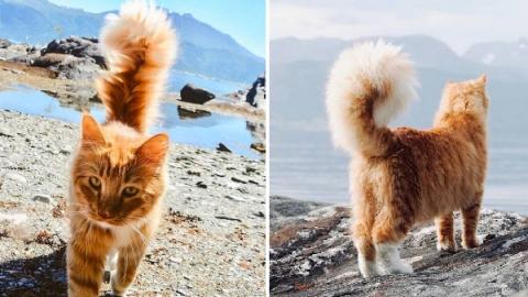 แมวจอมผจญภัย!! จากแมวจรจัด ตามติดเจ้าของไปทุกที่