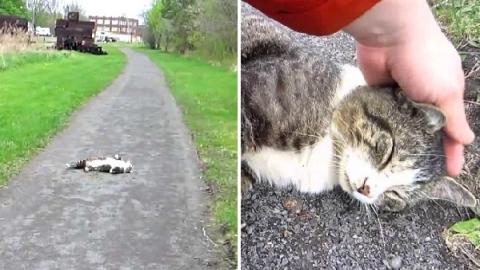 แมวเจ้าถิ่นเรียกเก็บส่วย จ่ายส่วยด้วยการหยุดเล่นกับเค้าซะดีๆ