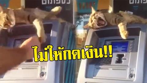 ไม่ให้กดเงิน! แมวน้อยสุดกวน ใช้อุ้งเท้าปัดคนที่จะมากดเงินตู้ATM !!(คลิป)