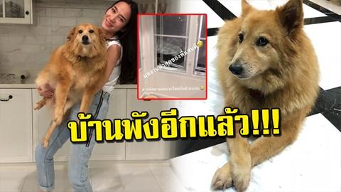 พังรอบที่ล้าน!!! อั้ม พัชราภา บ้านพังอีกแล้ว!! เหตุน้องหมาสุดรักงอน!!!!