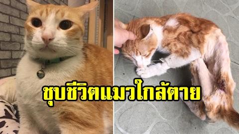 ไม่น่ารอด! หนุ่มใจบุญ ชุบชีวิตแมวใกล้ตาย ให้มีชีวิตใหม่อย่างปาฏิหาริย์