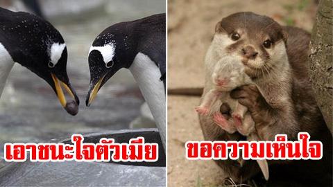 ภาพหาดูยาก! ส่องความน่ารักของสัตว์โลก ในมุมที่คุณไม่เคยได้เห็น