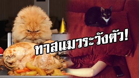 ทาสแมวระวังตัว! ภาพหลักฐานยืนยัน แมวกำลังวางแผนครองโลก