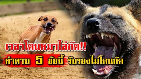 นาทีชีวิตอย่าคิดสู้!! ทำตาม 5 ข้อนี้ เวลาโดนหมาไล่กัด