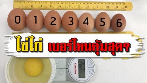 แม่บ้านต้องรู้!! ซื้อ ''ไข่ไก่'' เบอร์ไหนคุ้มที่สุด มาดู!!!