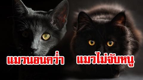 ลางดีหรือลางร้าย! 7 ความเชื่อโบราณ อาถรรพ์ลางบอกเหตุจากแมว
