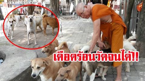 วัดเดือดร้อนหนัก!! หลังรัฐบาลเตรียมประกาศขึ้นทะเบียนสุนัข-แมว ต้องเสียค่าใช้จ่ายตัวละ 450 บาท