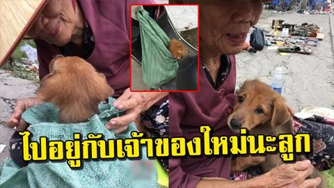 น้ำตาไหล!! สาวจำใจซื้อ ยายเอาลูกสุนัขมาขาย พอรู้ถึงสาเหตุถึงกับน้ำตาคลอ!!