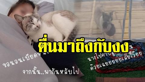 แบบนี้ก็ได้เหรอ! แม่แมวคาบลูกหลบลมหนาว เข้าเต้นท์นักท่องเที่ยว