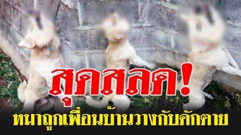 สลดใจหนัก!! สาวร้องหมาถูกเพื่อนบ้านวางกับดักตาย อ้างสุนัขไปกัดไก่