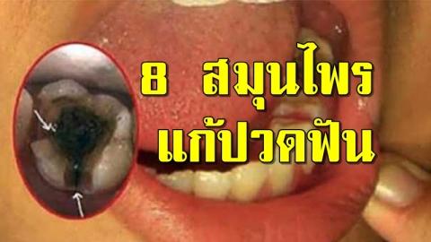 8 สมุนไพรไทย แก้ปวดฟัน (แมงกินฟัน) ทำง่ายหายปวด