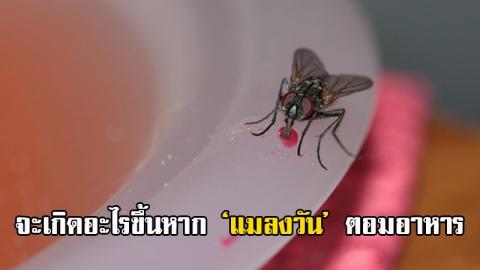 อยากรู้ไหม? ขณะที่แมลงวันตอมอาหาร มันกำลังทำอะไรอยู่?