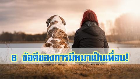 นี่แหละเพื่อนตาย! 6 ข้อดีของการมีหมาเป็นเพื่อน!