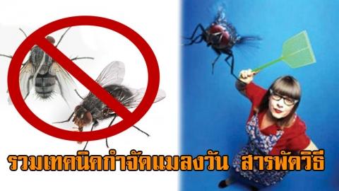 วิธีกำจัดแมลงวัน ให้สิ้นซากจากบ้านคุณ