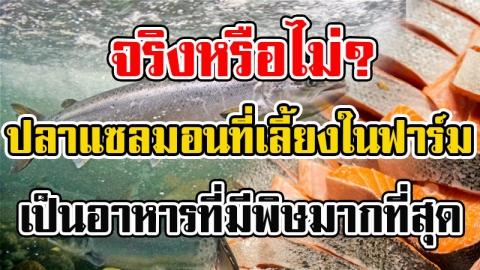 ปลาแซลมอนจากการเลี้ยงในฟาร์ม มีสารพิษมากกว่าอาหารอื่นๆถึง 5 เท่า!