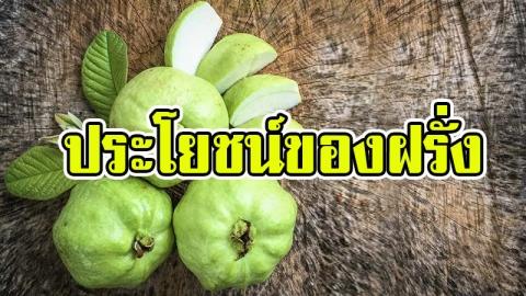 ประโยชน์ของฝรั่ง ผลไม้ลูกเล็กแต่สรรพคุณไม่เล็กเลย