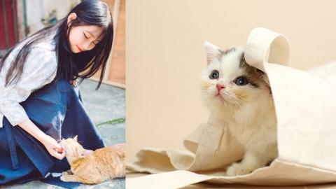 ทาสแมวต้องรู้ 12 สายพันธุ์ที่เหมาะกับคนแต่ละราศี