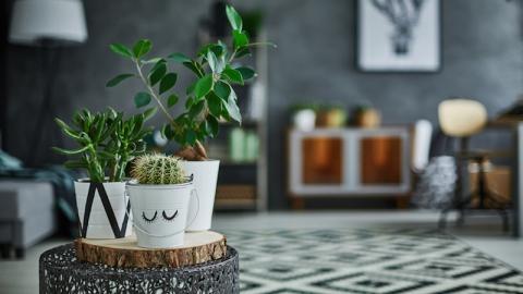 ต้นไม้ 3 ประเภทปลูกแล้วจะรับทรัพย์ รับโชค และรับความสุข