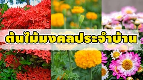 เสริมฮวงจุ้ยด้วย 8 ต้นไม้มงคล เพื่อสิริมงคลและโชคลาภ ประจำปี 2564