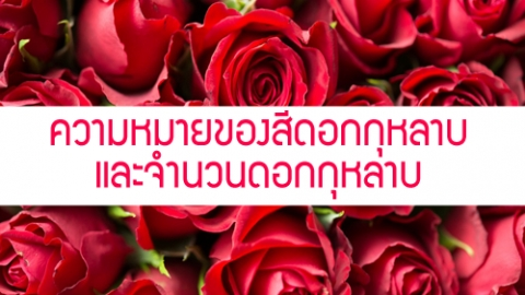 รักใครให้ดอกกุหลาบ ความหมายของดอกกุหลาบและจำนวนดอกกุหลาบ