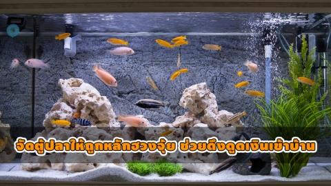 จัดตู้ปลาตามฮวงจุ้ยเสริมดวงให้ร่ำรวย ปราศจากพลังร้ายทั้งปวง