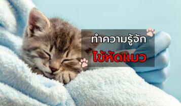 วิธีป้องกันแมวที่คุณรักไม่ให้เป็นโรคไข้หัดแมว