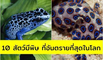 10 สัตว์มีพิษ ที่อันตรายที่สุดในโลก