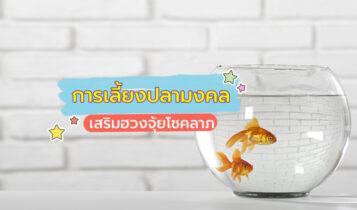 เลี้ยงปลาอย่างไร ให้มีเงินทองไหลเข้าบ้าน