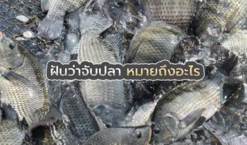 โบราณว่า ฝันว่าจับปลา ฝันเห็นปลา จะนำพาโชคลาภมาให้