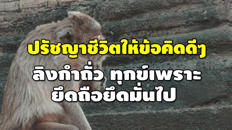 ปรัชญาชีวิตให้ข้อคิดดีๆ ลิงกำถั่ว ทุกข์เพราะ ยึดถือยึดมั่นไป